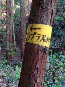 石ブテ尾根の表示テープ