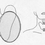 甲状腺の図